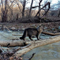 Ecological path in the mountainous Adygea <br />«By the trails of the wild cat»